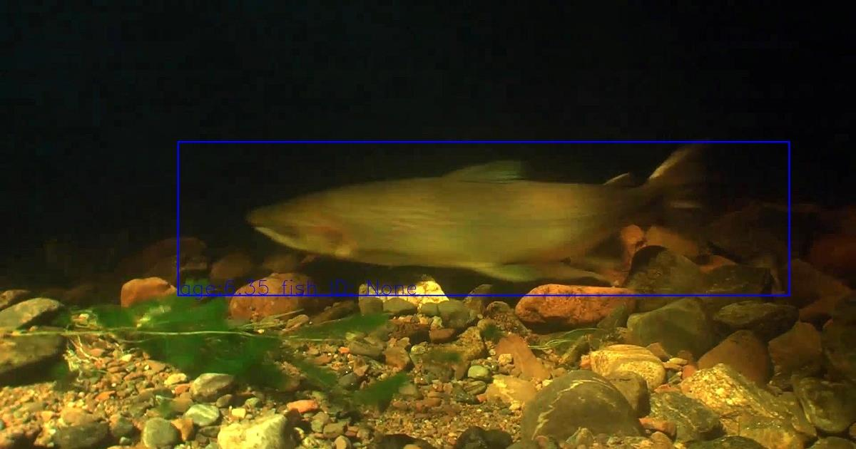 A salmon is detected in footage from underwater cameras in the River Ness.