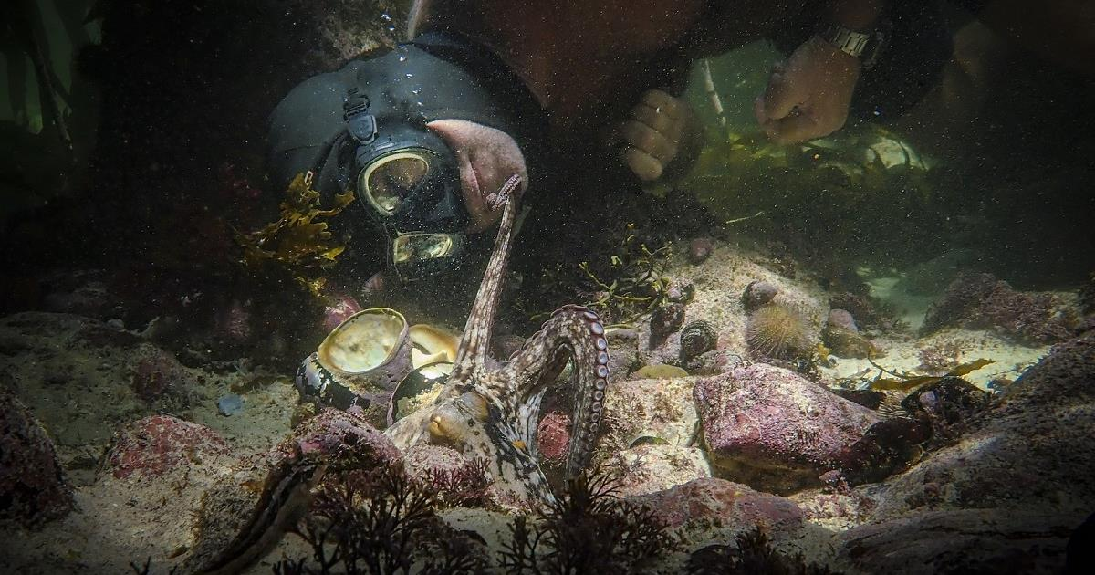 """Filmmaker and naturalist Craig Foster bonds with an octopus in a kelp forest off of the coast of Cape Town, South Africa in """"My Octopus Teacher."""" Cr: Netflix"""
