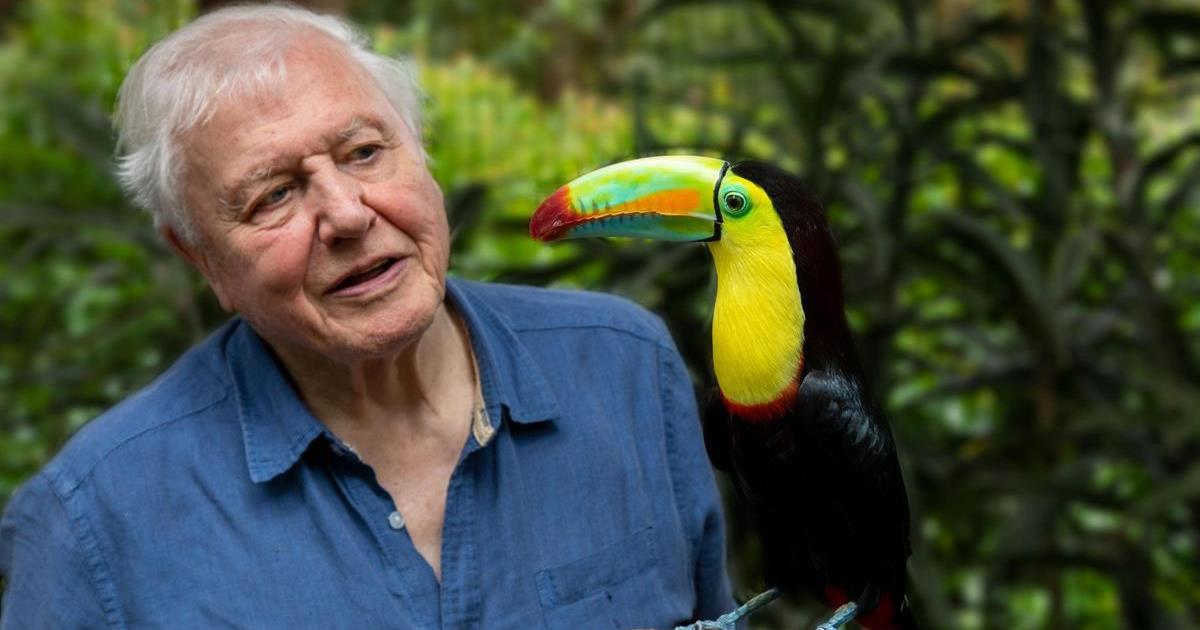 "David Attenborough filming ""Life in Color with David Attenborough"" in Costa Rica. Cr: BBC/Netflix"