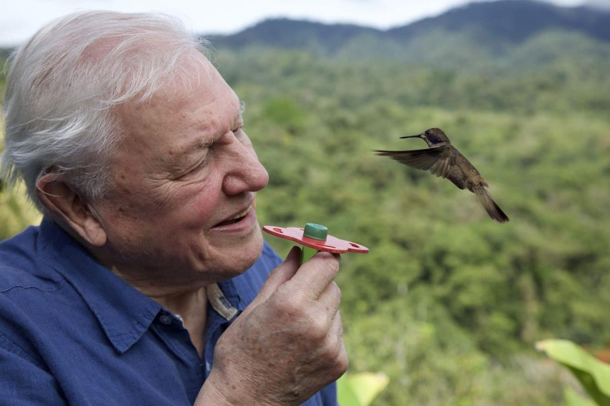 """Attenborough with a hummingbird in Costa Rica in """"Life in Color with David Attenborough."""" Cr: BBC/Netflix"""